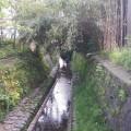 鎌倉の小川